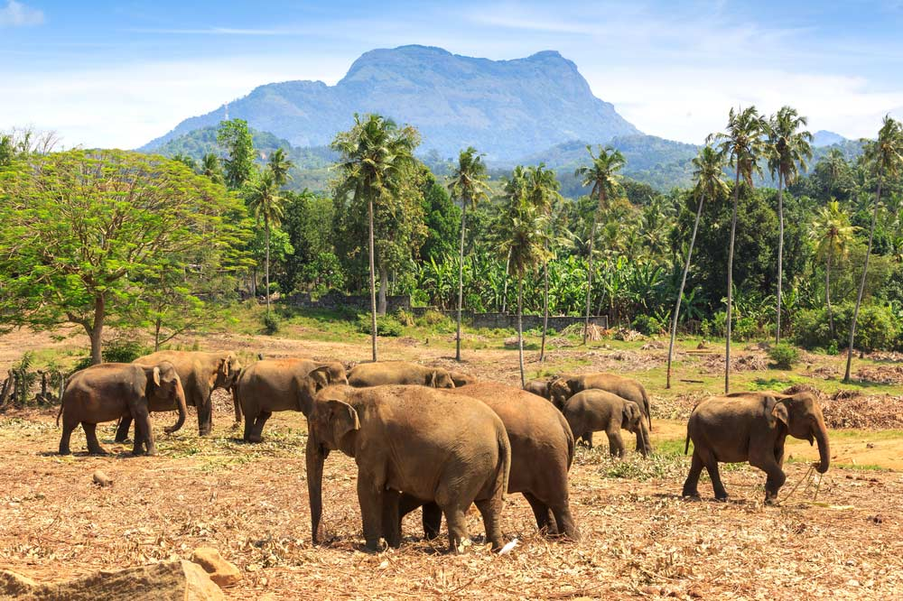 Travelbay Sri Lanka Tours - 8 Day Super Gorgeous Highlights Tour - Sri Lanka Small Group Tours - Pinnawala Elephant Orphanage, Sri Lanka