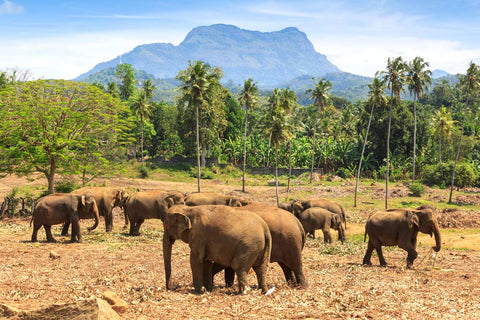 Sri Lanka - 8 Day Super Gorgeous Highlights Private Tour