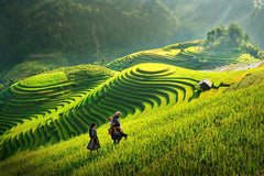Travelbay Vietnam Tours - 3 Days in the Spectacular Sapa - Vietnam Small Group Tours - Rice Fields, Sapa