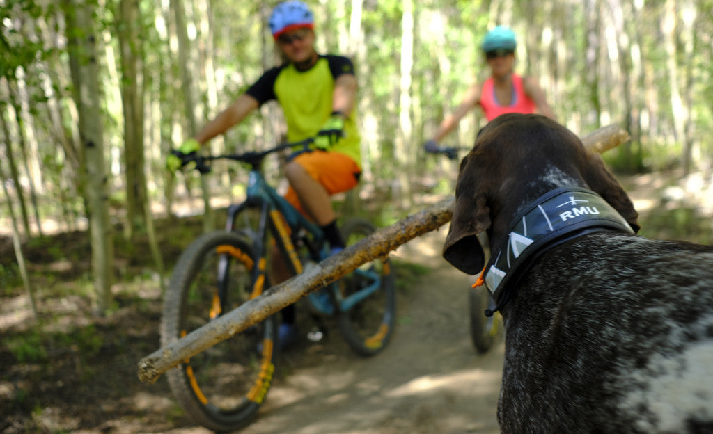 The Grrowler, the World's First Water Bowl that Turns into a Dog Collar