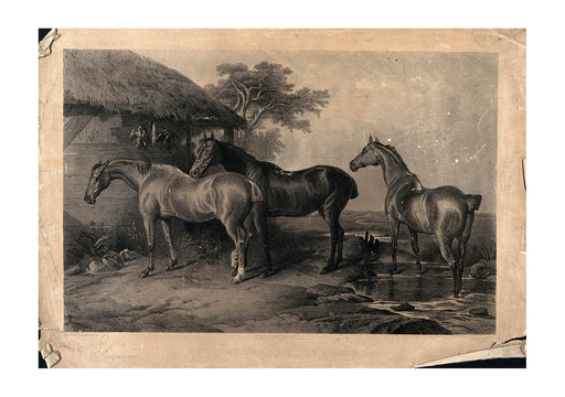 Edwin Landseer - Three horses