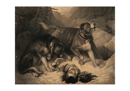 Edwin Landseer - Two St Bernard dogs with an avalanche victim