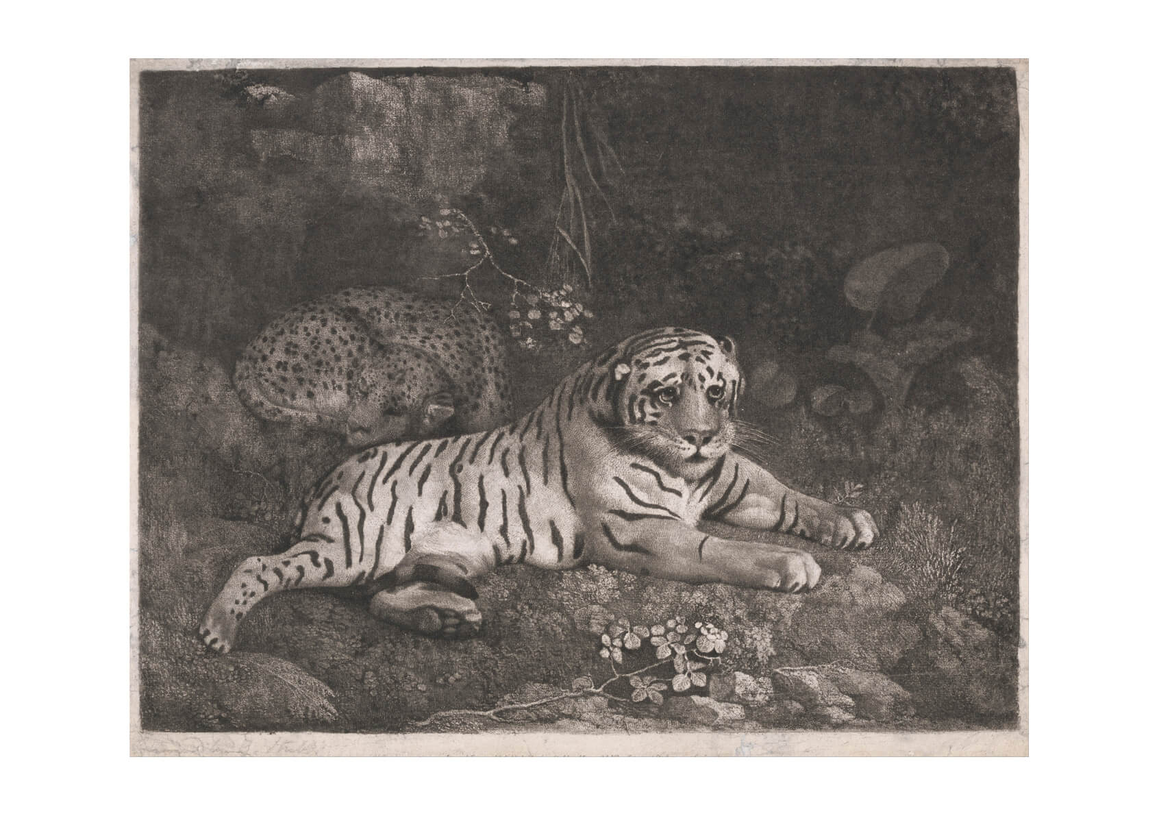 George Stubbs - A Tiger and a Sleeping Leopard