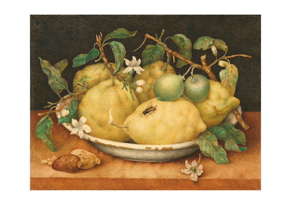 Giovanna Garzoni - Still Life With Bowl Of Citrons