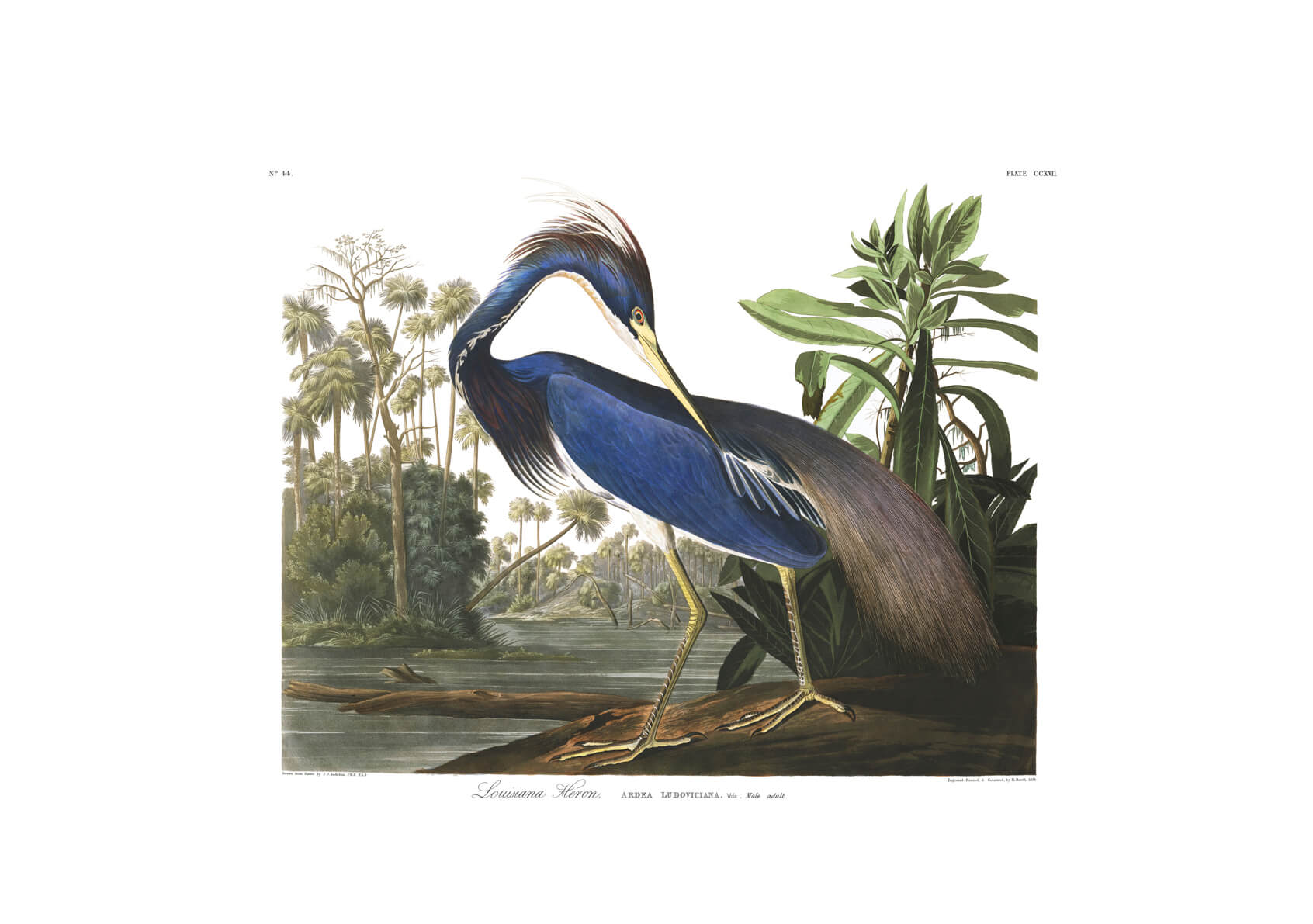 John James Audubon - Louisiana Heron from Birds of America