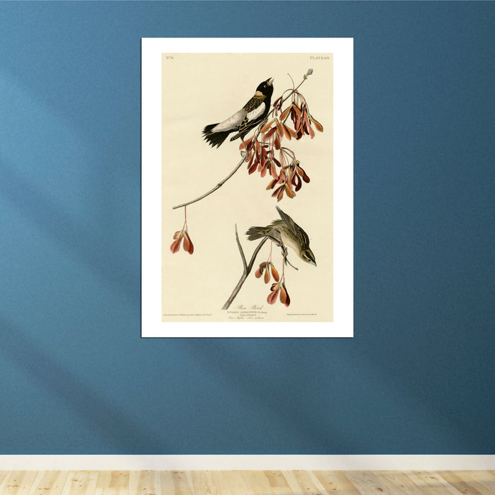 John James Audubon - Rice Bird