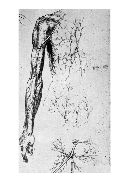 Leonardo Da Vinci - Fig 55 The Anatomist