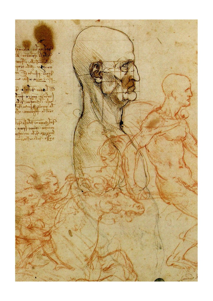 Leonardo Da Vinci - Study of a Head