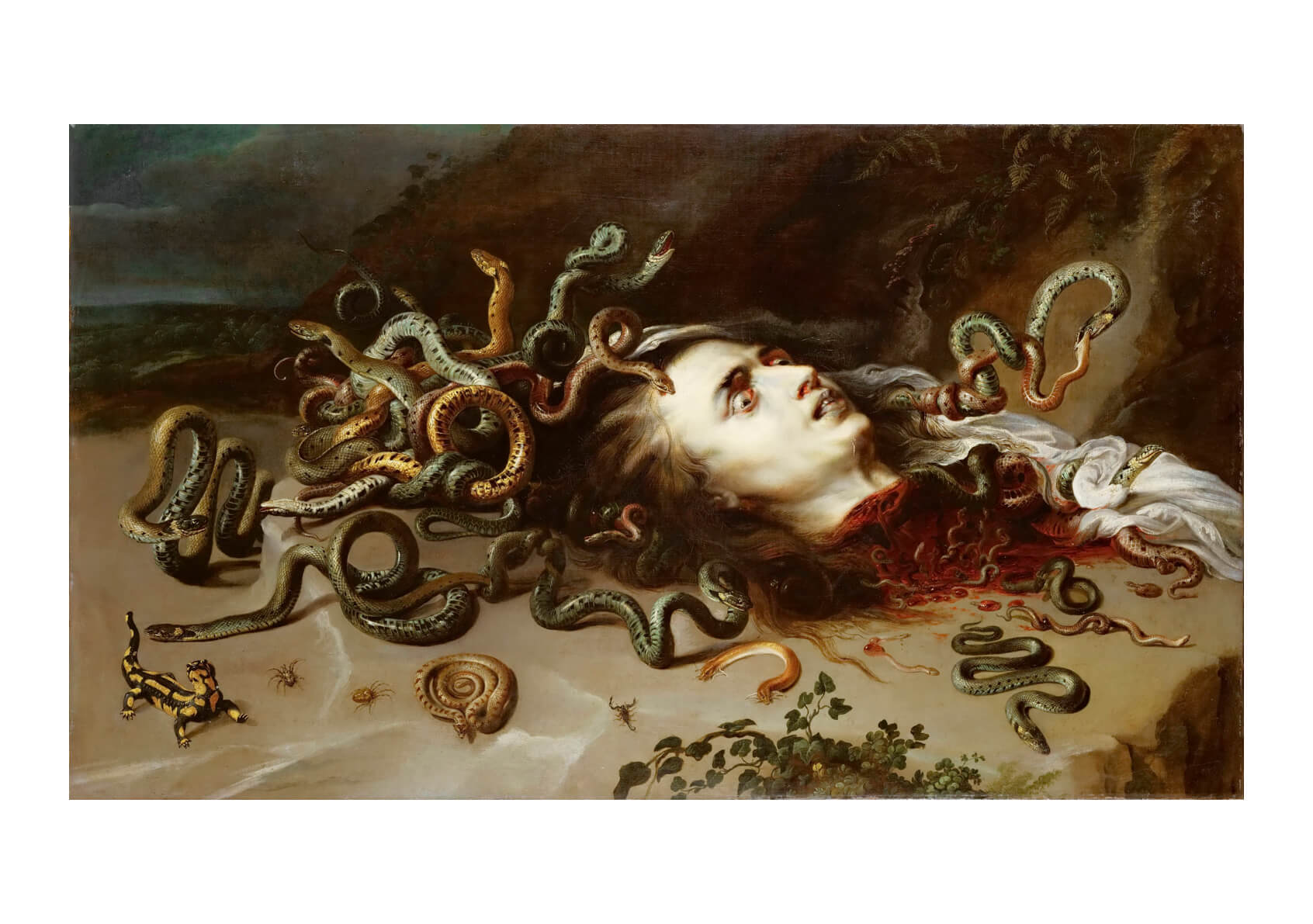 Peter Paul Rubens - Medusa