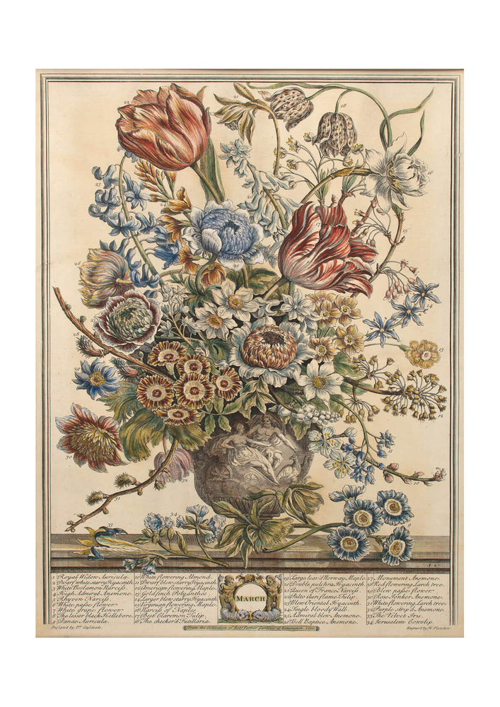 Roberty Furber - Furber Twelve Months of Flowers March