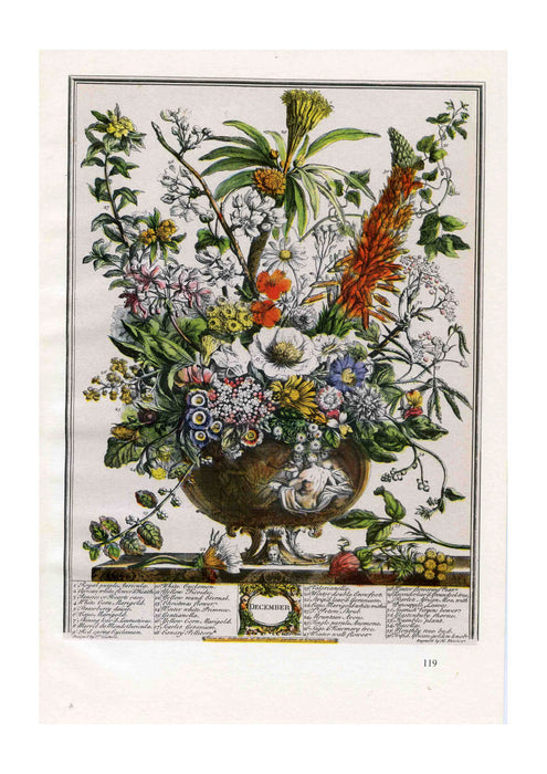 Roberty Furber - Twelve Months of Flowers December