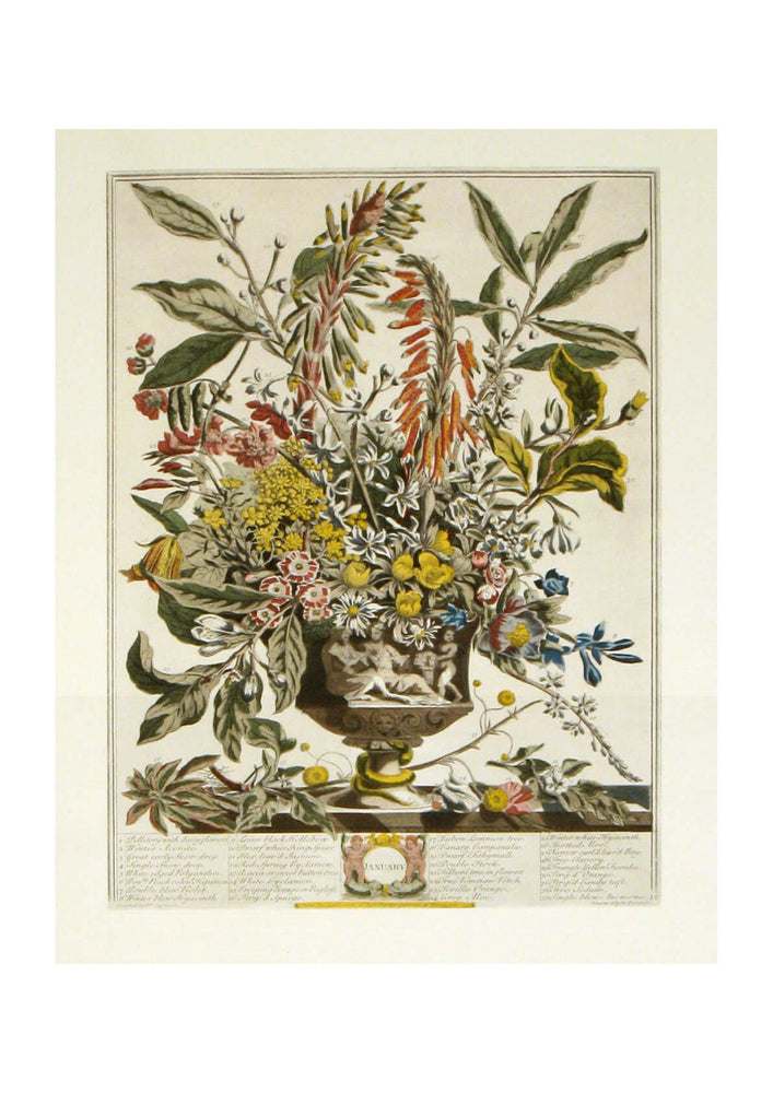 Roberty Furber - Twelve Months of Flowers January