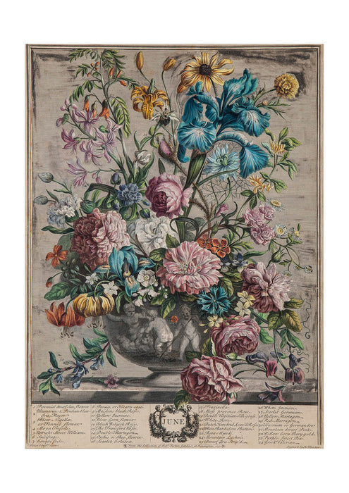 Roberty Furber - Twelve Months of Flowers June