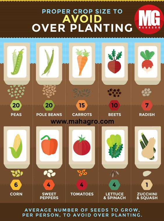 How many seeds should you plant for proper growth?
