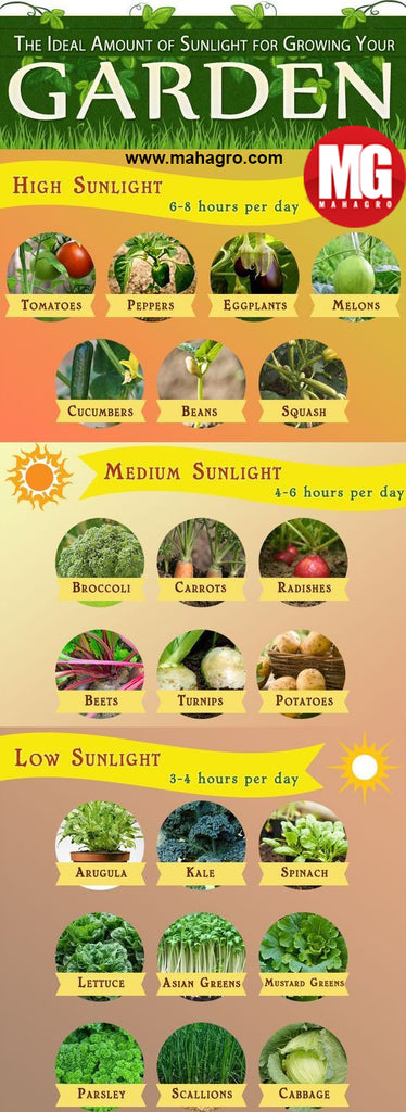 Sunlight guide for growing your plants properly