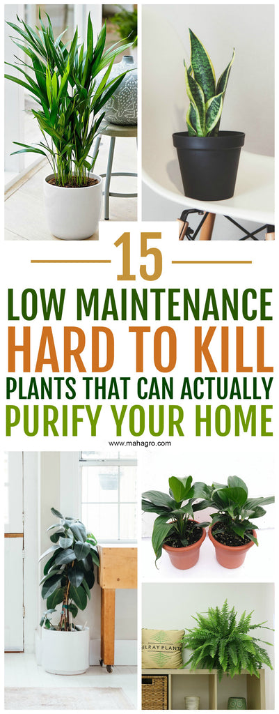 15 Air Purifying Plants You Need In Your Home