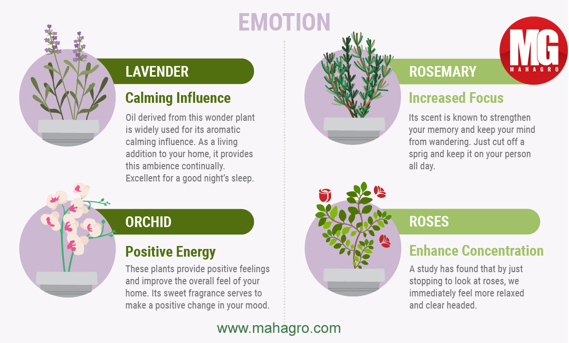 plants that improve emotional health and well being
