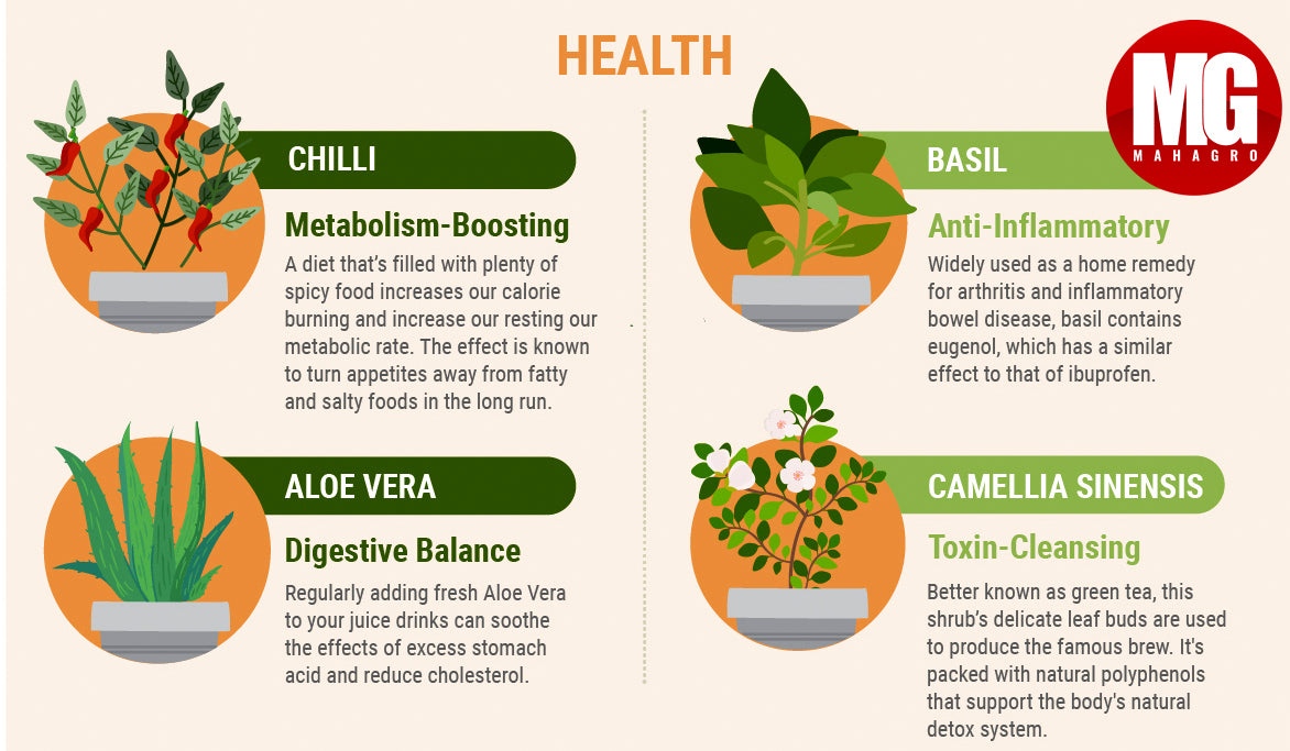 plants that improve your health