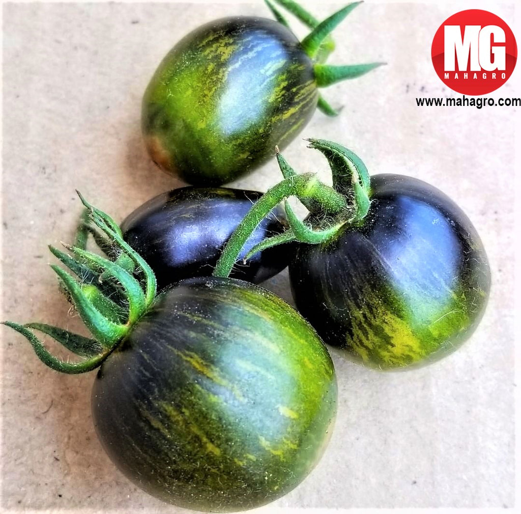 Grown in MahaGro Potting Mix, do you know what these juicy veggies are? Thanks ma'am for sharing the pic!  Organic Potting Mix- https://bit.ly/2HOW4Ab  #gardening #organic #plants #mahagro #garden #soil #ecofriendly #eco #herbs #health #kitchen #sunlight #outdoors #vegetables #veggies #kitchengarden