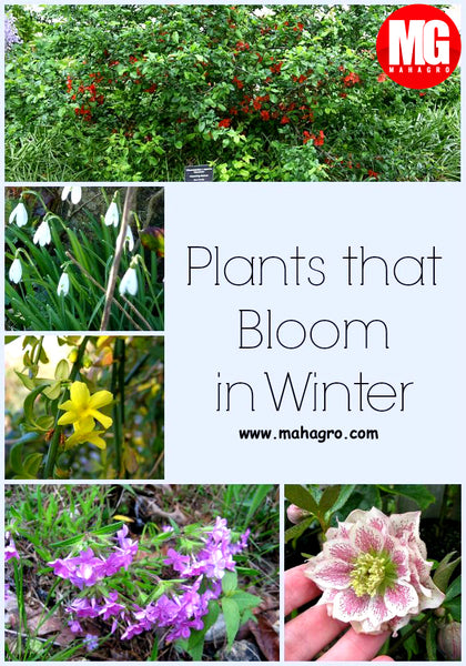 plants grow in winter
