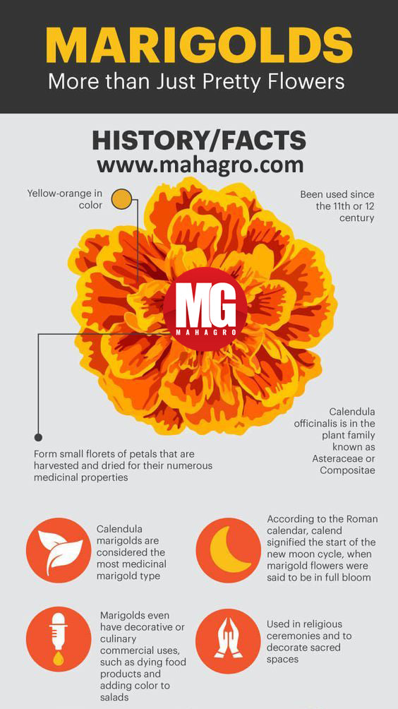 interesting facts about marigold flowers