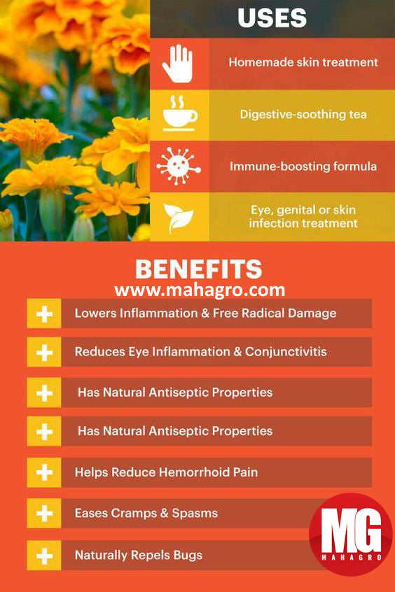 benefits and uses of marigold flowers