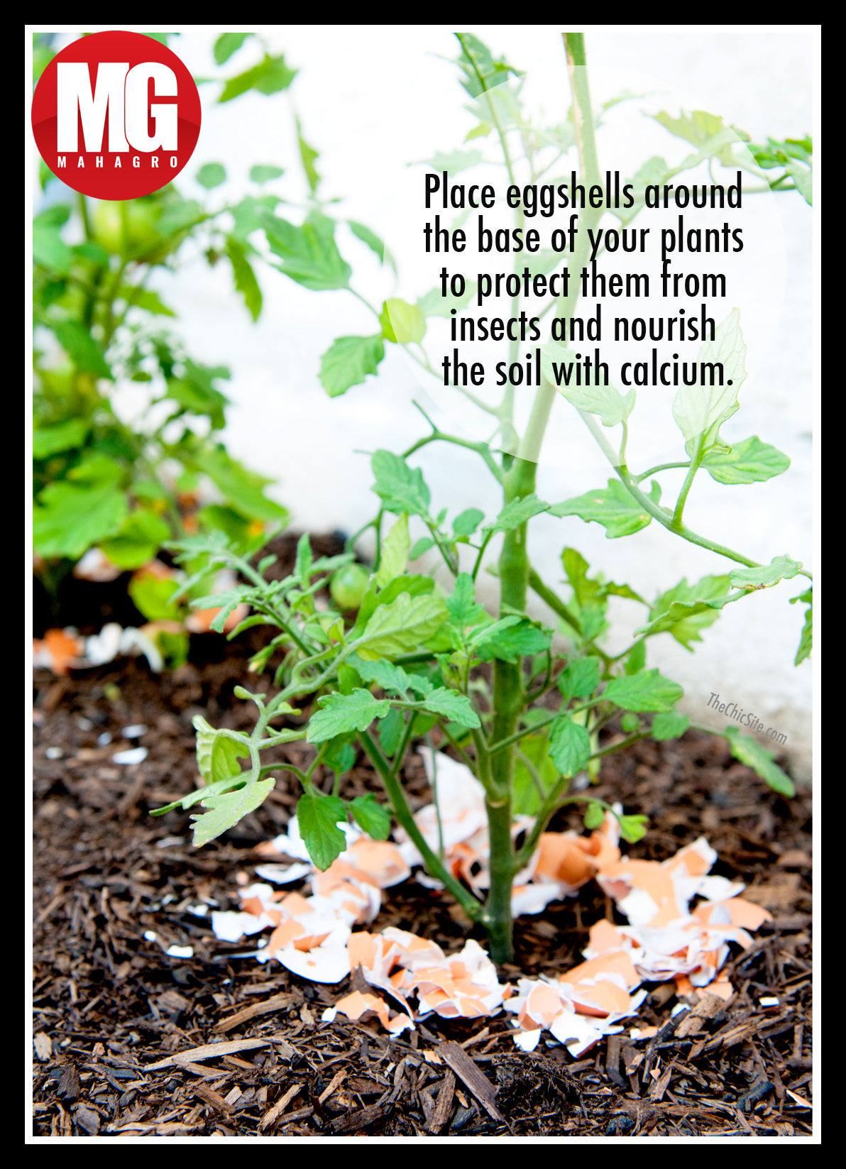 egg shells in plants