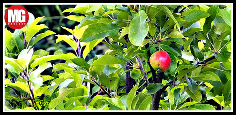 5 Solutions for Unproductive Fruit Trees