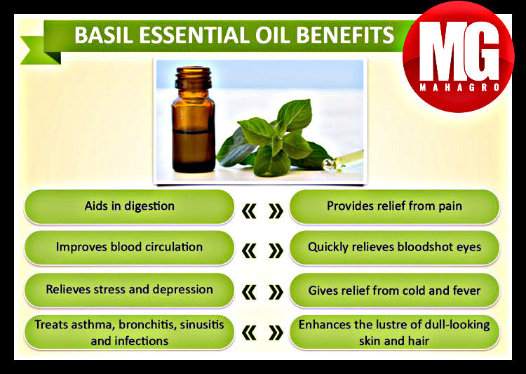 Basil Essential Oil Benefits.