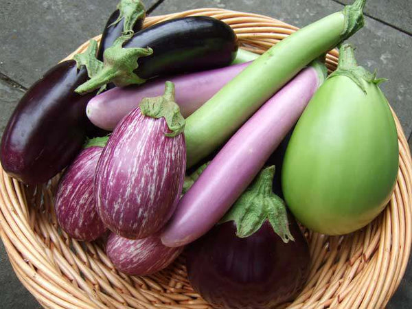 Best Vegetables to Grow in January in India
