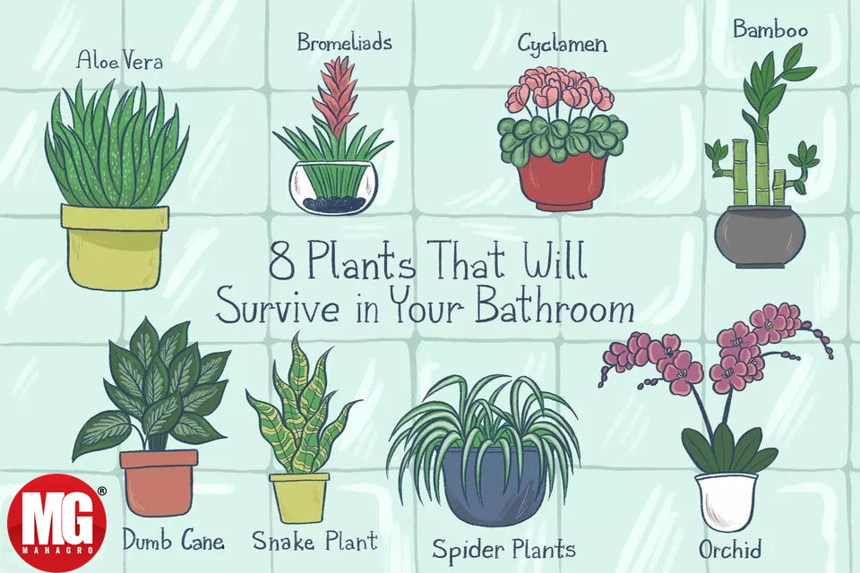Best Houseplants for Your Bathroom