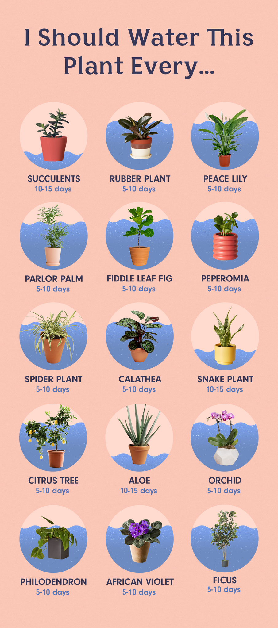 """When in doubt, feel the soil."" This Is How Often You Need To Water Your Plants"
