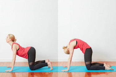 5 daily stretches to help with back pain relief  aidbrace