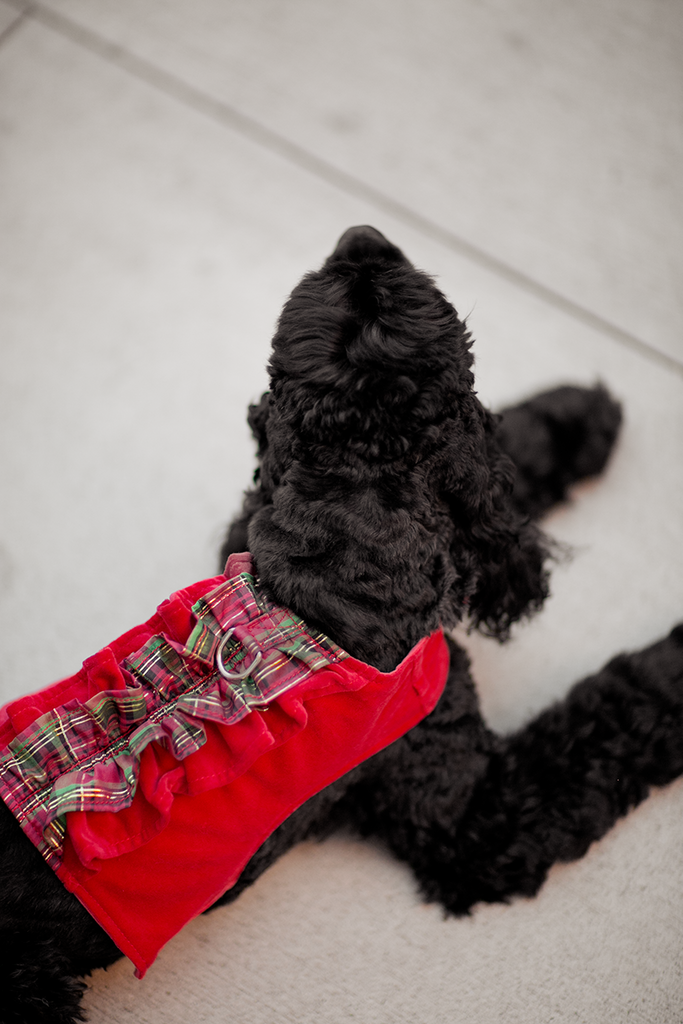 Pop Up Plaid Ruffle Harness.  Donate