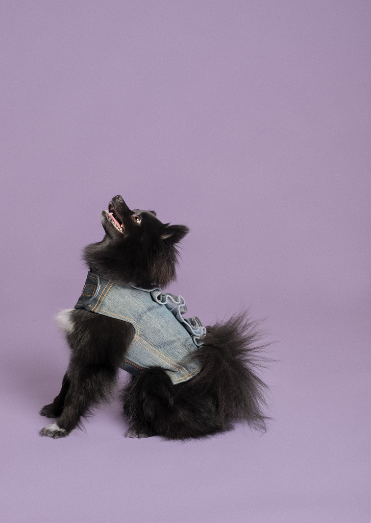 BLUE RUFFLES Migrubbie Denim Harness