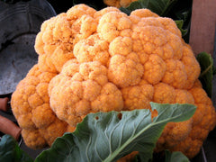 CAULIFLOWER TASTY ORANGE GL