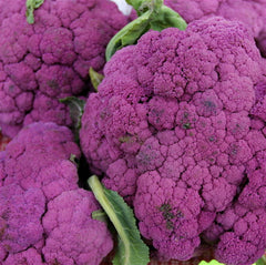 CAULIFLOWER TASTY PURPLE GL
