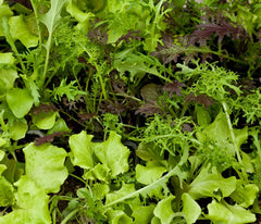 LETTUCE BLEND SIMPLY SALAD GLOBAL GOURMET MP