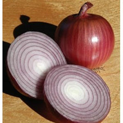 ONION RED TASTY GL