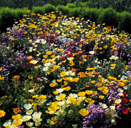 WILDFLOWER Z-SCAPE FLOWER FIELD GL