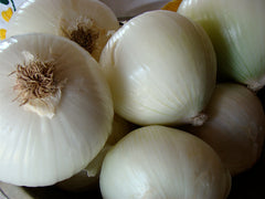 ONION WHITE TASTY WHITE GL
