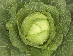 CABBAGE MONSTER GREEN GL