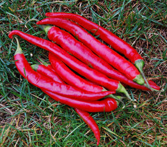 PEPPER HOT CAYENNE LARGE RED THICK
