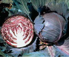 CABBAGE SUPER RED 80