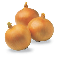 ONION YELLOW SWEET SPANISH YELLOW HYBRID
