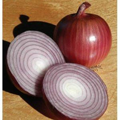 ONION RED FM TASTY GL