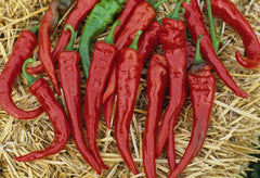 PEPPER HOT FM TASTY CAYENNE GL