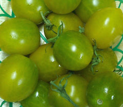 TOMATO CHERRY GREEN ELPHABA GL