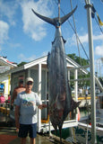 Large Marlin Catch