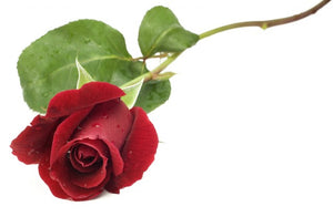 Gift Shop:  Long-Stemmed Rose
